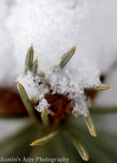 Miniature needles poke through the frosty crystals.