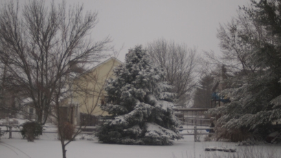 The snow might be deeper on the pines if the wind didn't keep blowing it off!