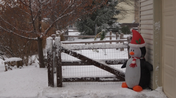 Our Christmas Penguin is protecting the house.