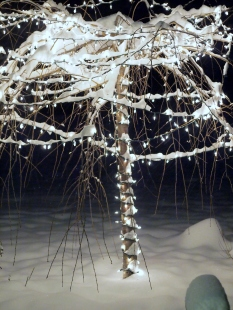 The snow is beautiful against the lights of our Christmas Cherry.