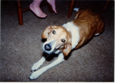 Our first dog, Isha.