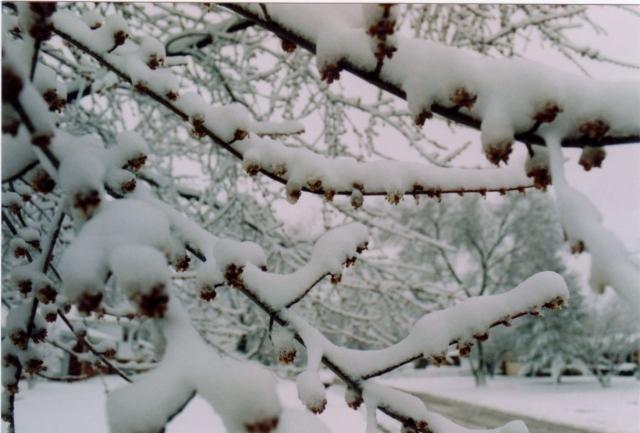 1991 Snowfall
