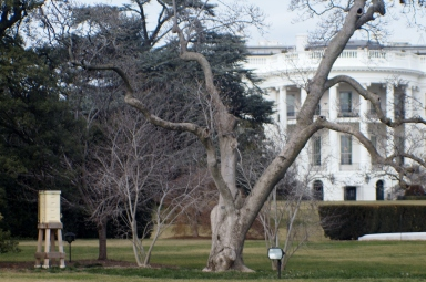 The White House Bee Hive