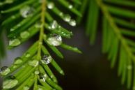 Dew on Dew