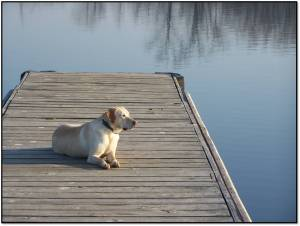 Sid on the Dock